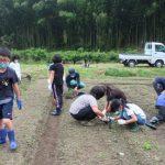 黒豆の植え替え